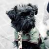 Negocios como veterinary babieca crean tendencia