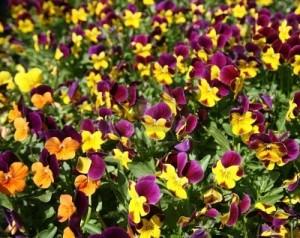 Viveros de plantas: La planta o flor perfecta para tu jardín