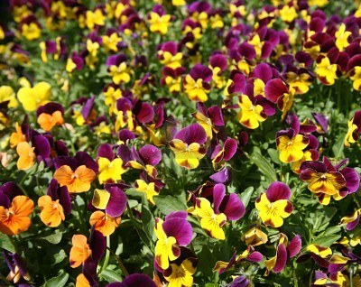 Viveros de plantas la planta o flor perfecta para tu for Vivero tu jardin