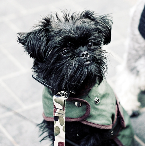veterinary babieca